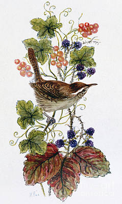 Wren On A Spray Of Berries Print by Nell Hill