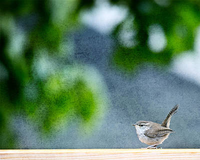 Wrens Photograph - Wren by Rebecca Cozart