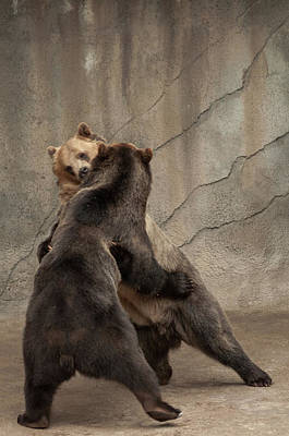 Photograph - Wrestling Bears by Stewart Helberg