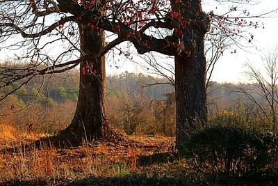 Photograph - Wrestling Oaks by Kathryn Meyer