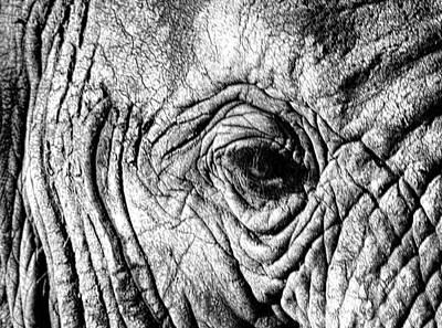 Wrinkled Eye Art Print by Douglas Barnard
