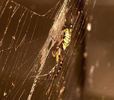Writing Spider Art Print