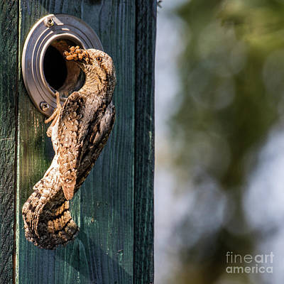 Photograph - Wryneck The Provider by Torbjorn Swenelius