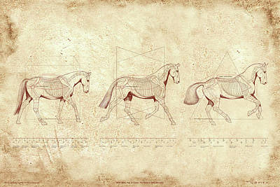 Canter Painting - Wtc, Walk, Trot, Canter, The Horse's Gaits Revealed by Catherine Twomey