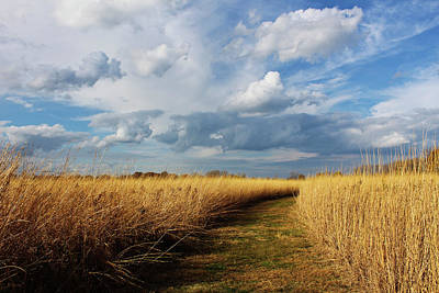 Photograph - Wyandot Wetland Meadows Preserve 2 by Shawna Rowe