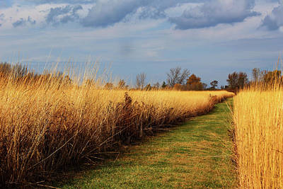 Photograph - Wyandot Wetland Meadows Preserve by Shawna Rowe