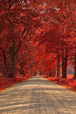 Photograph - Wye Island Ruby Road by Nicolas Raymond