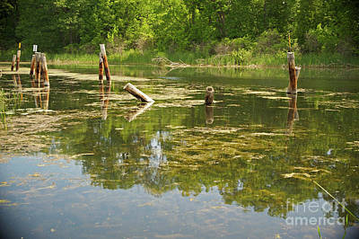 Photograph - Wye River Reflections by Elaine Mikkelstrup