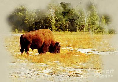 Bison Digital Art - Wyoming Buffalo by George  Voyajolu