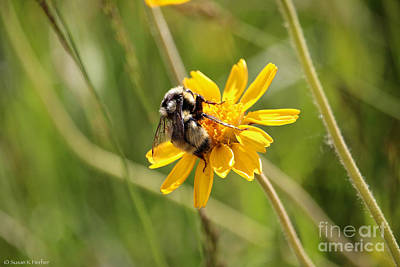 Photograph - Wyoming Busy Bee by Susan Herber