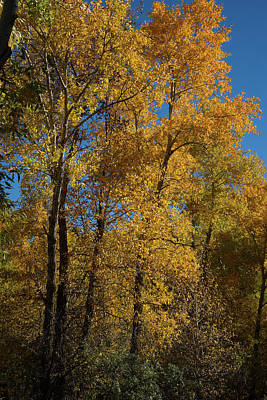 Photograph - Wyoming Fall by Frank Madia