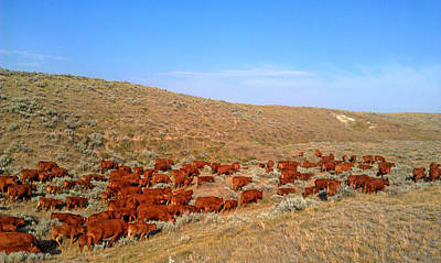 Photograph - Wyoming Reds by Amanda Smith