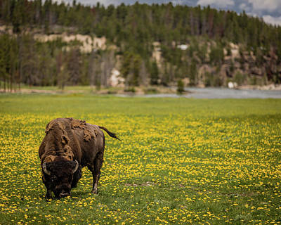 Wyoming Wild Art Print by Gary Migues
