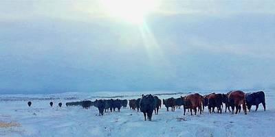Photograph - Wyoming Winter Push by Amanda Smith