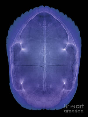 Slider Photograph - X-ray Of A Turtle Shell by Ted Kinsman
