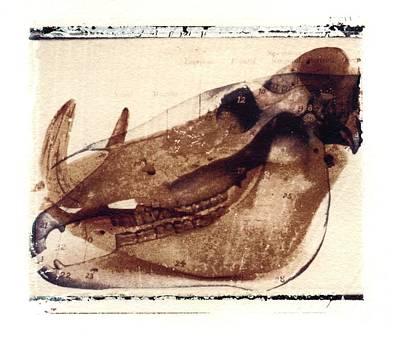 X Ray Terrestrial No. 6 Art Print by Jane Linders