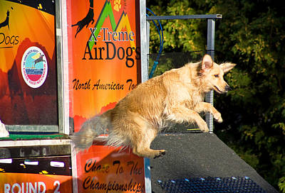 Photograph - X-treme Airdogs by Tyra OBryant