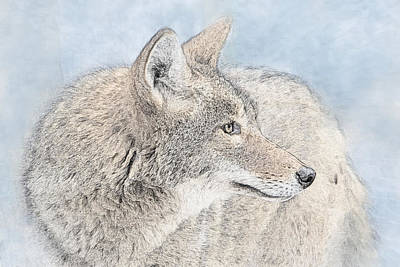 Photograph - Coyote Photo Sketch by Patti Deters