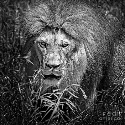Photograph - Xerxes Portrait Black And White by Sonya Lang