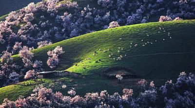 Photograph - Xin Jiang 05 by Junzhu Cao