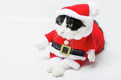 Photograph - xmas Santa Cat by Benny Marty