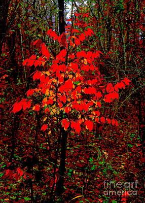Photograph - Xmas Tree by Jesse Ciazza