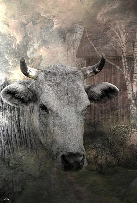 Thee Old Cow Art Print
