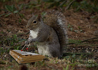 Photograph - Xylophone Player by Sandra Clark