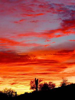 Photograph - Y Cactus Sunset 3 by Judy Kennedy