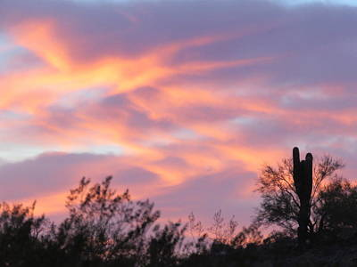 Photograph - Y Cactus Sunset 5 - Light by Judy Kennedy