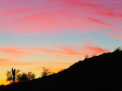 Photograph - Y Cactus Sunset 9 by Judy Kennedy