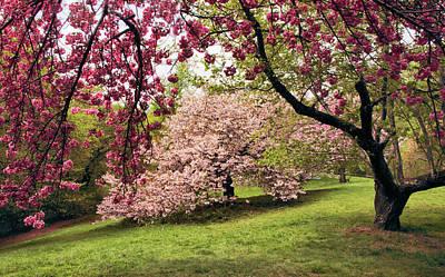 Photograph - Cherry Blossom Canopy  by Jessica Jenney