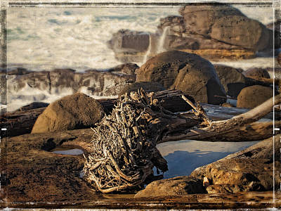 Photograph - Yachats Roots by Thom Zehrfeld