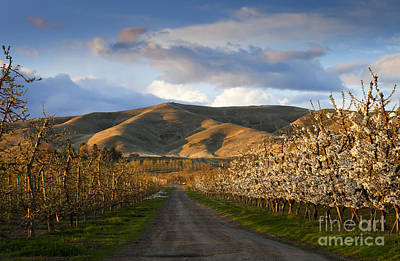 Yakima Valley Spring Art Print by Mike  Dawson