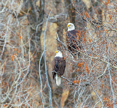 Photograph - Yampa Couple  by Kevin Dietrich