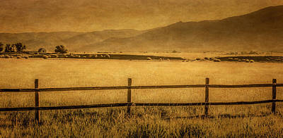 Photograph - Yampa Valley Pasture by Don Schwartz