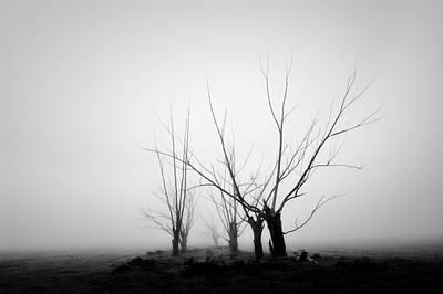 Photograph - Yandembah 2 by Mihai Florea