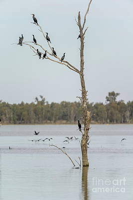 Photograph - Yanga Lake 03 by Werner Padarin