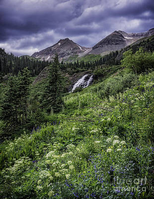 Photograph - Yankee Boy Basin #1 by Bitter Buffalo Photography