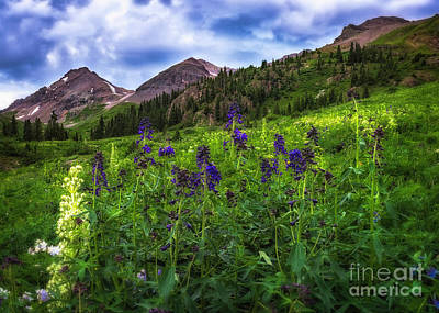 Photograph - Yankee Boy Basin by Bitter Buffalo Photography