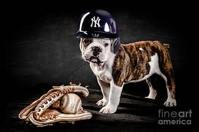 Yankee Bulldog Art Print by Jt PhotoDesign
