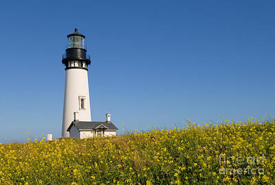 Photograph - Yaquina Head Lighthouse by Greg Vaughn - Printscapes