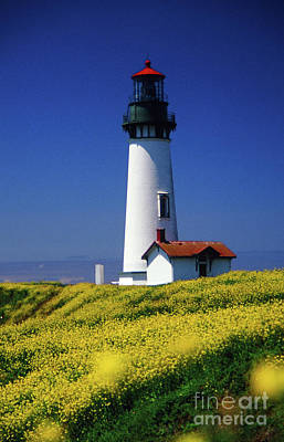 Photograph - Yaquina Head Lighthouse by Rick Bures