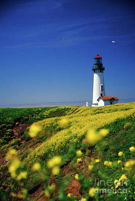 Photograph - Yaquina Head Lighthouse- V2 by Rick Bures