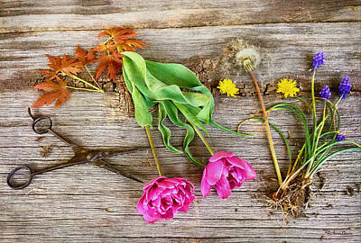 Photograph - Yard Gathering by Anna Louise