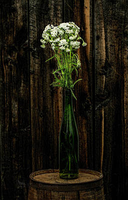 Photograph - Yarrow by Fred Denner