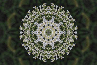 Photograph - Yarrow Lace Kaleidoscope by Robyn Stacey