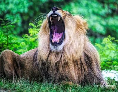 Photograph - Yawn by Paulette Thomas