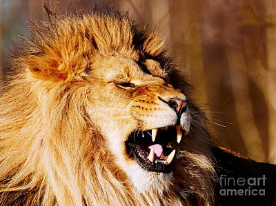 Photograph - Yawning Lion by Nick Biemans