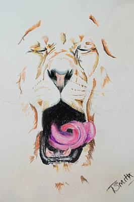 Pastel - Yawning Lion  by Teresa Smith